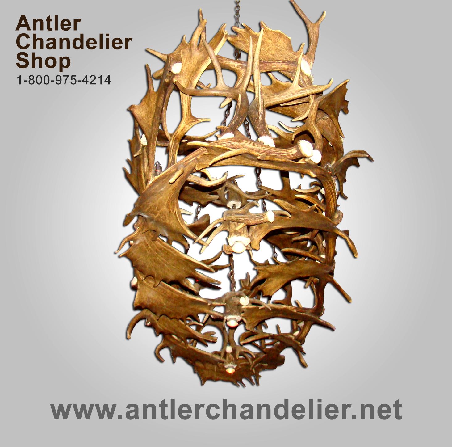 Real antler custom fallow whitetail deer chandelier cfwt antler real antler custom fallow whitetail deer chandelier cfwt arubaitofo Gallery